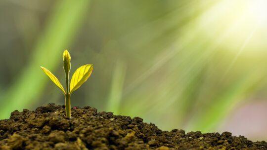 Das Pflanzenparadies für zu Hause schaffen: Die Homebox